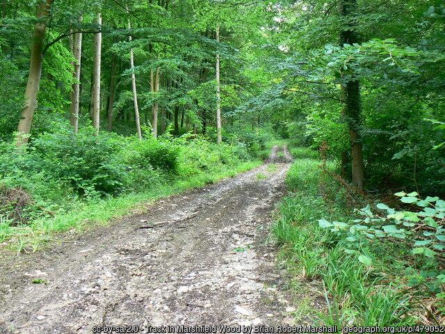 Track in Marshfield Wood